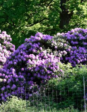 Haver | Parker | Rododendronpark | Slotsparker | Faaborg